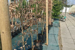 Plante9