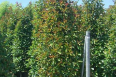 plante7