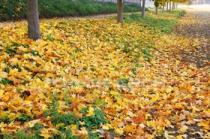 chute-feuilles2