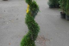 plante4