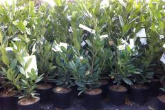 plante6